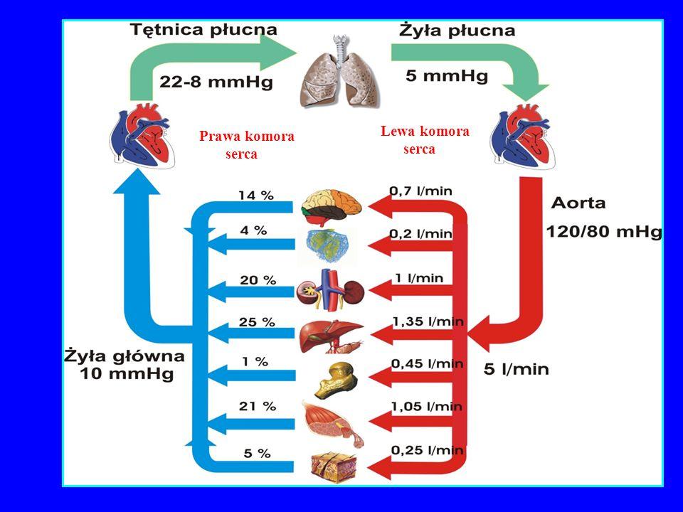 Prawa komora serca Lewa komora serca