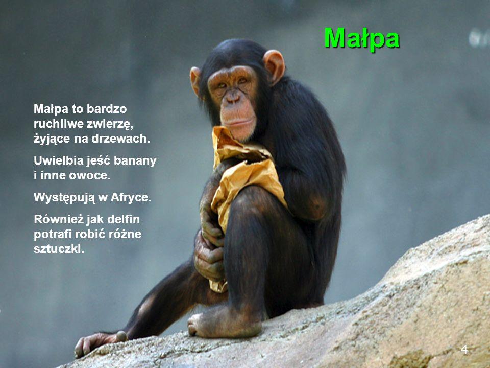 4 Małpa Małpa to bardzo ruchliwe zwierzę, żyjące na drzewach. Uwielbia jeść banany i inne owoce. Występują w Afryce. Również jak delfin potrafi robić