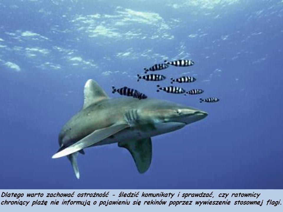 Rekiny już samym wyglądem budzą respekt - szary grzbiet ze złowrogą płetwą, biały brzuch, rzędy ostrych zębów.
