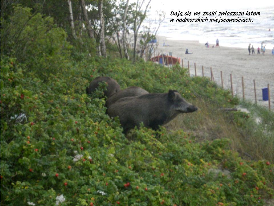 W Polsce również można spotkać zwierzęta, których towarzystwo na wakacjach może być uciążliwe.