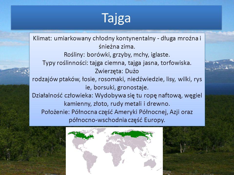 Tajga Klimat: umiarkowany chłodny kontynentalny - długa mroźna i śnieżna zima. Rośliny: borówki, grzyby, mchy, iglaste. Typy roślinności: tajga ciemna