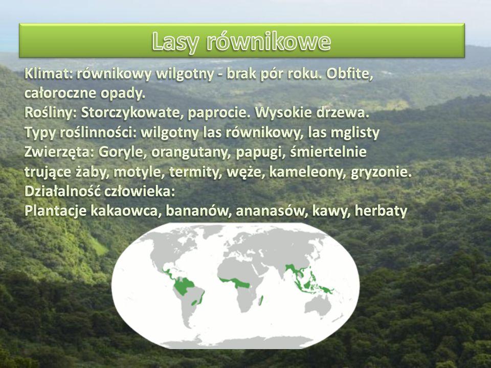 Zwierzęta lasów równikowych MałpyHipopotamy Papugi Węże Lamparty