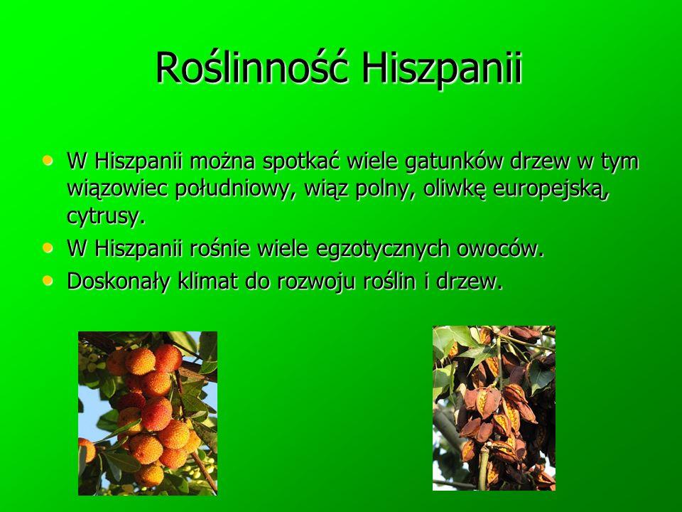 Roślinność Hiszpanii W Hiszpanii można spotkać wiele gatunków drzew w tym wiązowiec południowy, wiąz polny, oliwkę europejską, cytrusy. W Hiszpanii mo