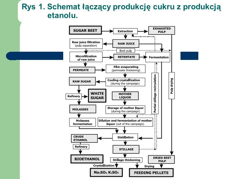 Rys 1. Schemat łączący produkcję cukru z produkcją etanolu.