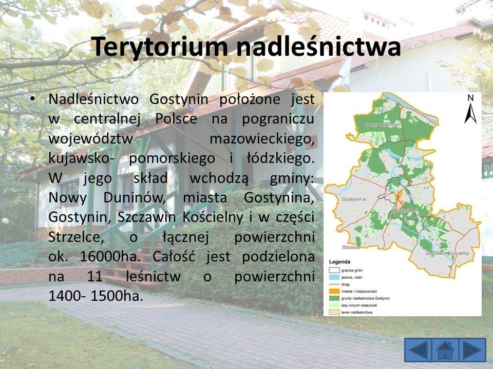 Terytorium nadleśnictwa Nadleśnictwo Gostynin położone jest w centralnej Polsce na pograniczu województw mazowieckiego, kujawsko- pomorskiego i łódzkiego.