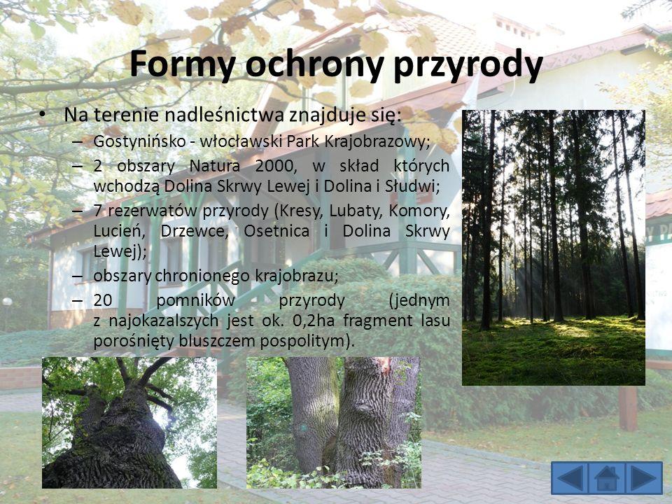 Formy ochrony przyrody Na terenie nadleśnictwa znajduje się: – Gostynińsko - włocławski Park Krajobrazowy; – 2 obszary Natura 2000, w skład których wchodzą Dolina Skrwy Lewej i Dolina i Słudwi; – 7 rezerwatów przyrody (Kresy, Lubaty, Komory, Lucień, Drzewce, Osetnica i Dolina Skrwy Lewej); – obszary chronionego krajobrazu; – 20 pomników przyrody (jednym z najokazalszych jest ok.