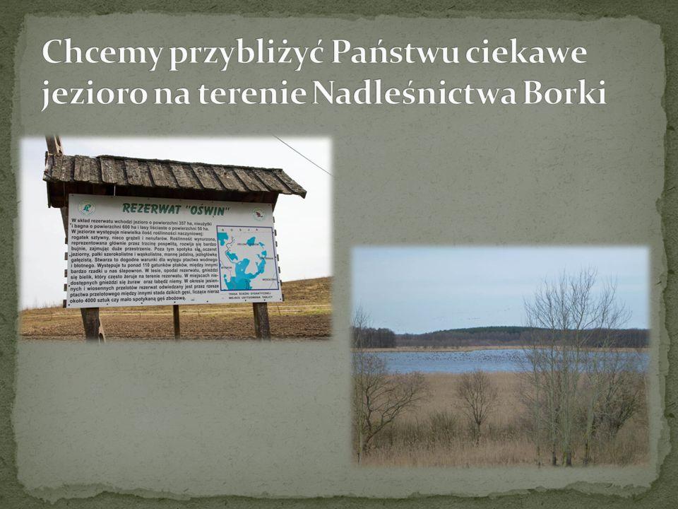 Widok na jezioro od strony Wesołowa