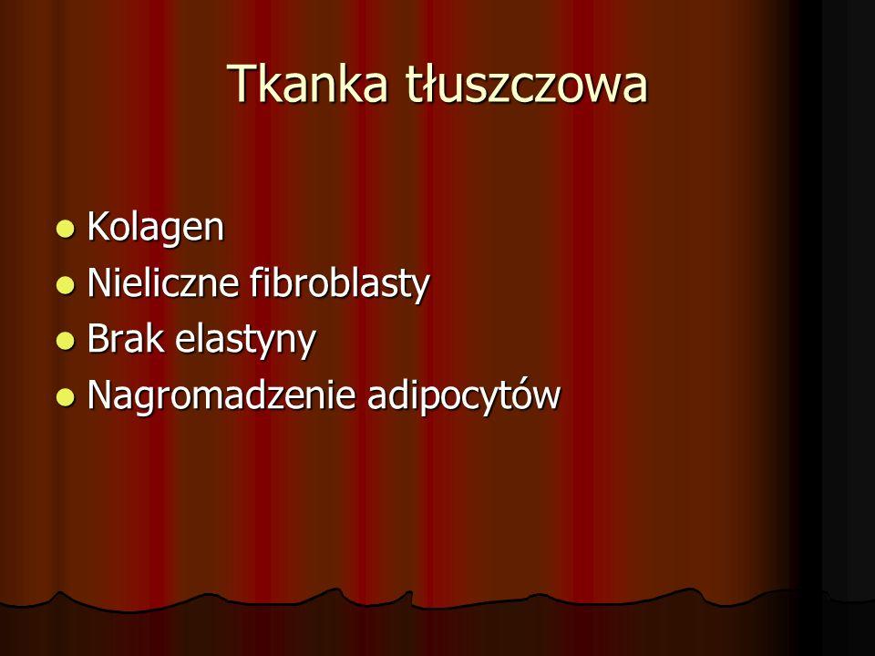 Tkanka tłuszczowa Kolagen Kolagen Nieliczne fibroblasty Nieliczne fibroblasty Brak elastyny Brak elastyny Nagromadzenie adipocytów Nagromadzenie adipo