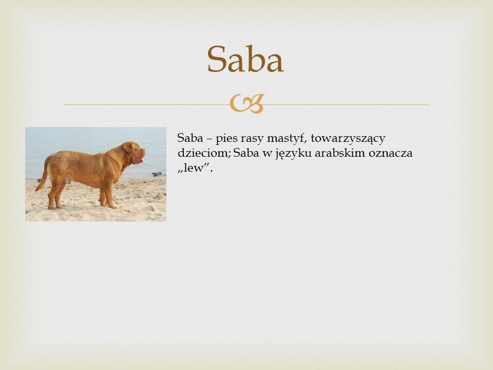 """ Saba Saba – pies rasy mastyf, towarzyszący dzieciom; Saba w języku arabskim oznacza """"lew ."""