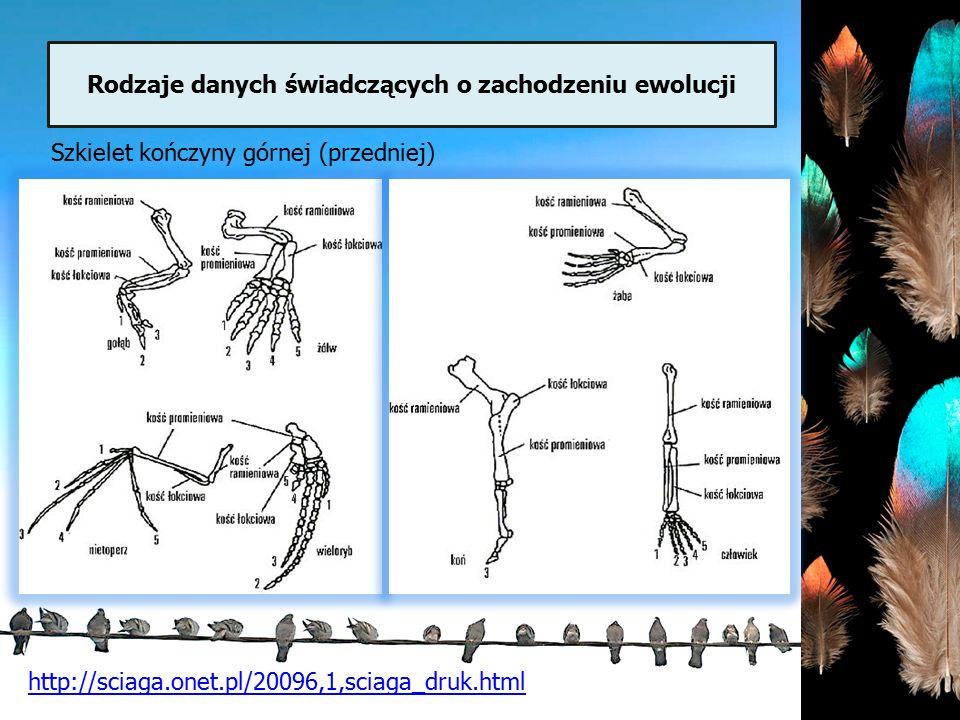 Rodzaje danych świadczących o zachodzeniu ewolucji http://sciaga.onet.pl/20096,1,sciaga_druk.html Szkielet kończyny górnej (przedniej)