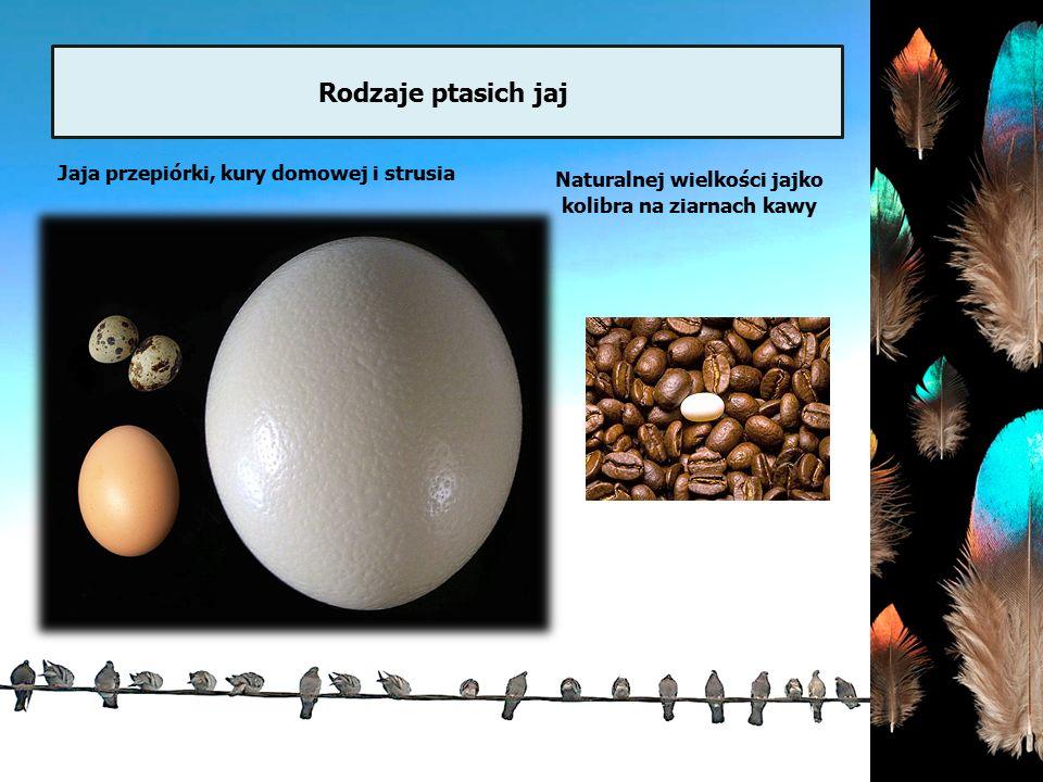 Rodzaje ptasich dziobów