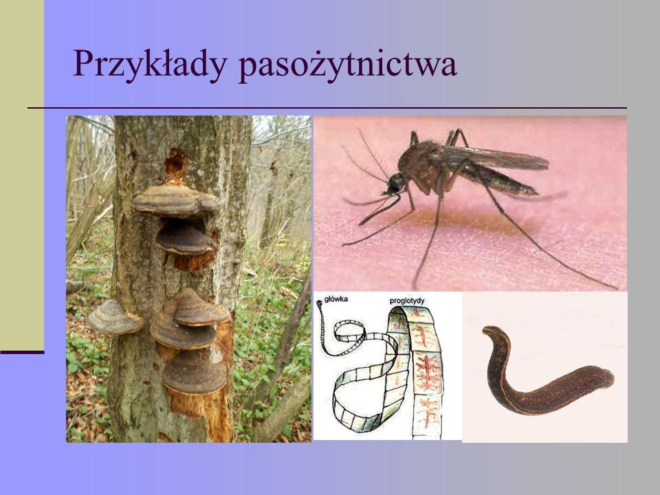 Przykłady pasożytnictwa