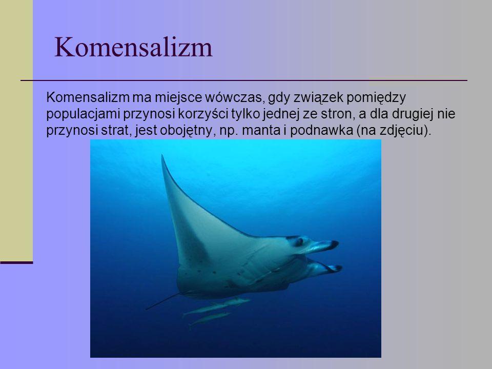 Drapieżnictwo Drapieżnictwo to oddziaływania pomiędzy organizmami różnych gatunków, polegające na tym, że osobniki jednego gatunku zabijają i zjadają osobniki należące do drugiego gatunku.