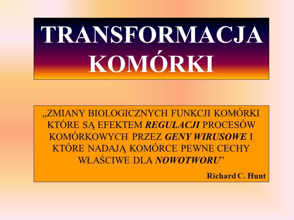 """TRANSFORMACJA KOMÓRKI """"ZMIANY BIOLOGICZNYCH FUNKCJI KOMÓRKI KTÓRE SĄ EFEKTEM REGULACJI PROCESÓW KOMÓRKOWYCH PRZEZ GENY WIRUSOWE I KTÓRE NADAJĄ KOMÓRCE"""