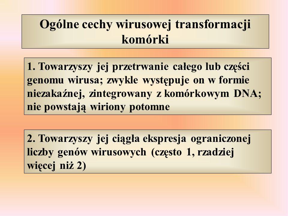 Ogólne cechy wirusowej transformacji komórki 1. Towarzyszy jej przetrwanie całego lub części genomu wirusa; zwykle występuje on w formie niezakaźnej,