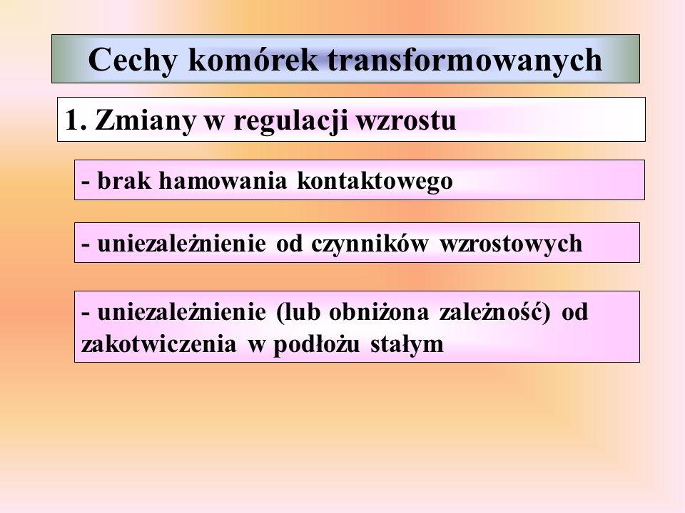 Cechy komórek transformowanych 1.