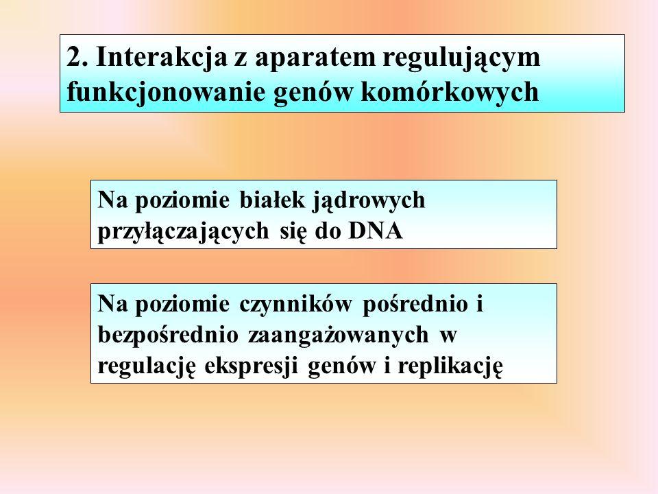 Na poziomie białek jądrowych przyłączających się do DNA Na poziomie czynników pośrednio i bezpośrednio zaangażowanych w regulację ekspresji genów i replikację 2.