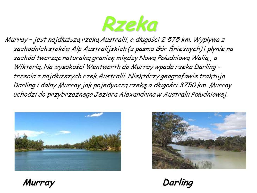 Rzeka Murray – jest najdłuższą rzeką Australii, o długości 2 575 km.