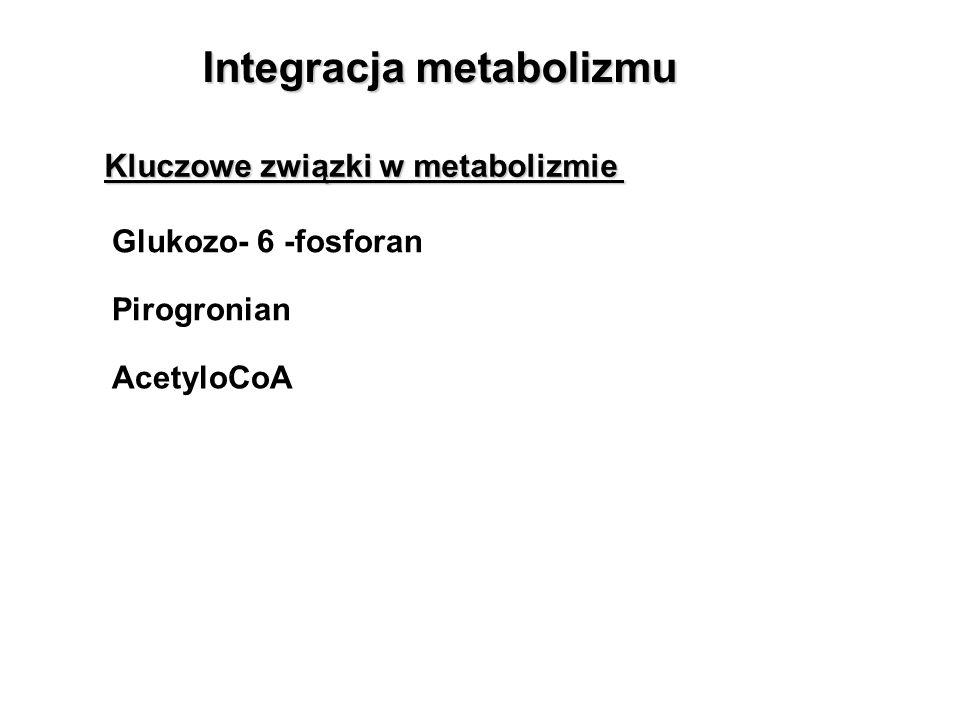 Integracja metabolizmu Glukozo- 6 -fosforan Pirogronian AcetyloCoA Kluczowe związki w metabolizmie