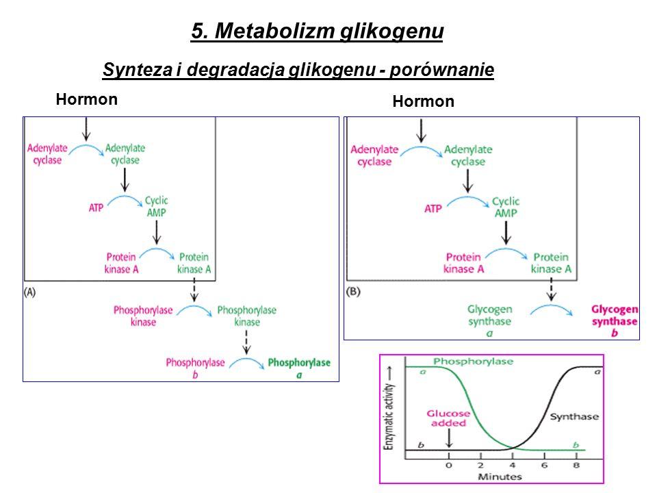 Synteza i degradacja glikogenu - porównanie Hormon 5. Metabolizm glikogenu