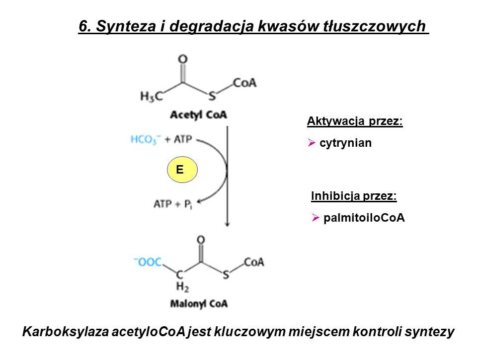 Karboksylaza acetyloCoA jest kluczowym miejscem kontroli syntezy 6.