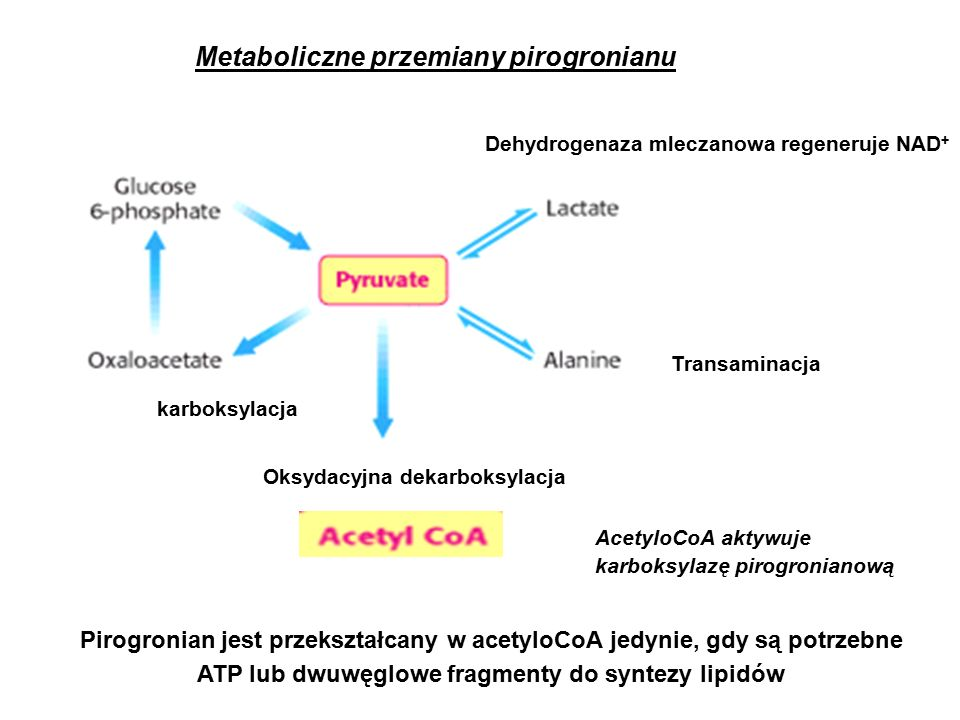Fruktozo 1,6-bisfosfataza jest głównym enzymem kontrolującym szybkość glukoneogenezy 4.