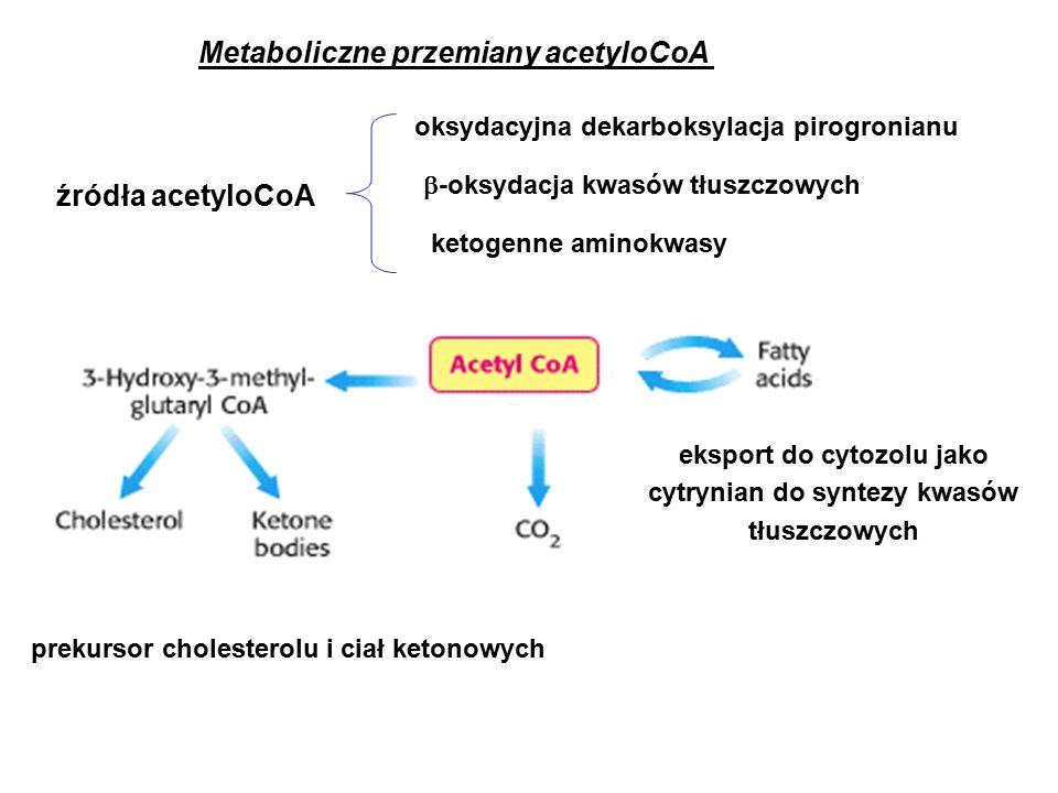 Metaboliczne przemiany acetyloCoA prekursor cholesterolu i ciał ketonowych oksydacyjna dekarboksylacja pirogronianu  -oksydacja kwasów tłuszczowych ketogenne aminokwasy eksport do cytozolu jako cytrynian do syntezy kwasów tłuszczowych źródła acetyloCoA