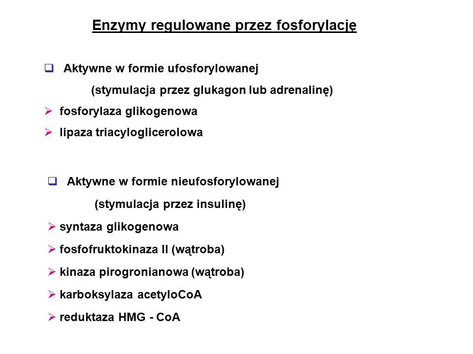 Enzymy regulowane przez fosforylację  Aktywne w formie ufosforylowanej (stymulacja przez glukagon lub adrenalinę)  fosforylaza glikogenowa  lipaza triacyloglicerolowa  Aktywne w formie nieufosforylowanej (stymulacja przez insulinę)  syntaza glikogenowa  fosfofruktokinaza II (wątroba)  kinaza pirogronianowa (wątroba)  karboksylaza acetyloCoA  reduktaza HMG - CoA