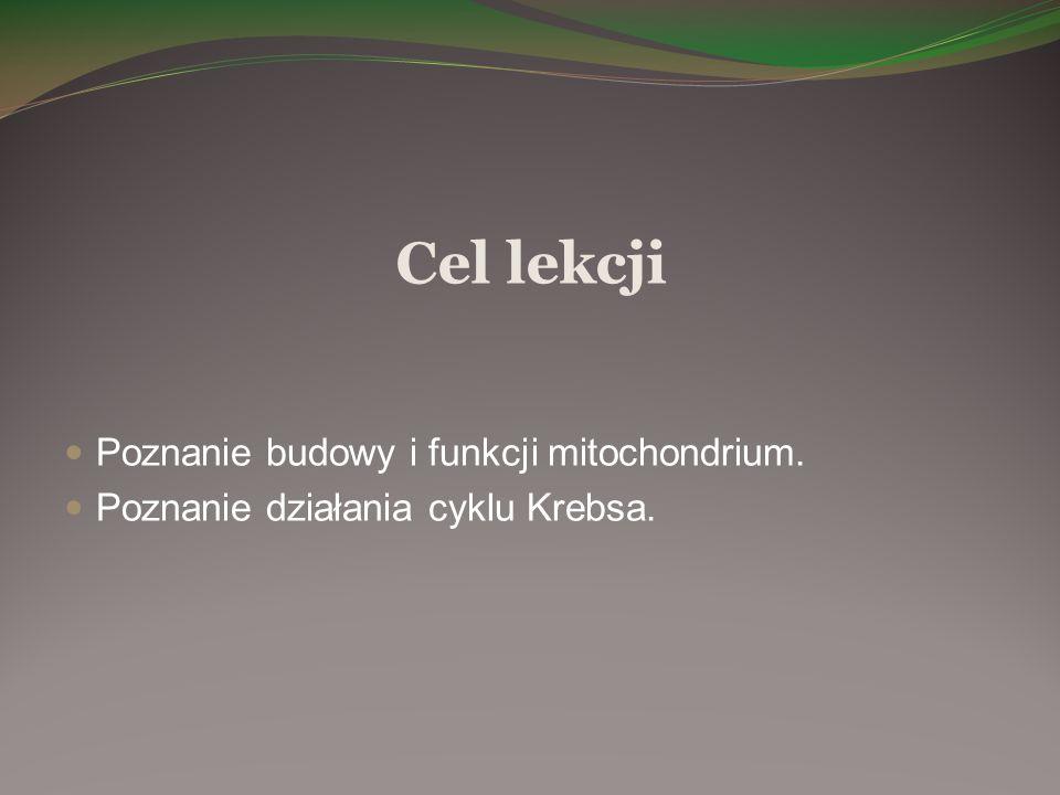 Cel lekcji Poznanie budowy i funkcji mitochondrium. Poznanie działania cyklu Krebsa.