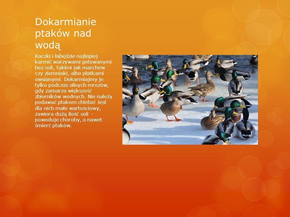 Dokarmianie ptaków nad wodą Kaczki i łabędzie najlepiej karmić warzywami gotowanymi bez soli, takimi jak marchew czy ziemniaki, albo płatkami owsianymi.