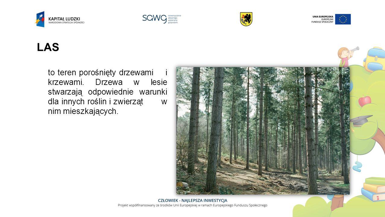 LAS to teren porośnięty drzewami i krzewami. Drzewa w lesie stwarzają odpowiednie warunki dla innych roślin i zwierząt w nim mieszkających.