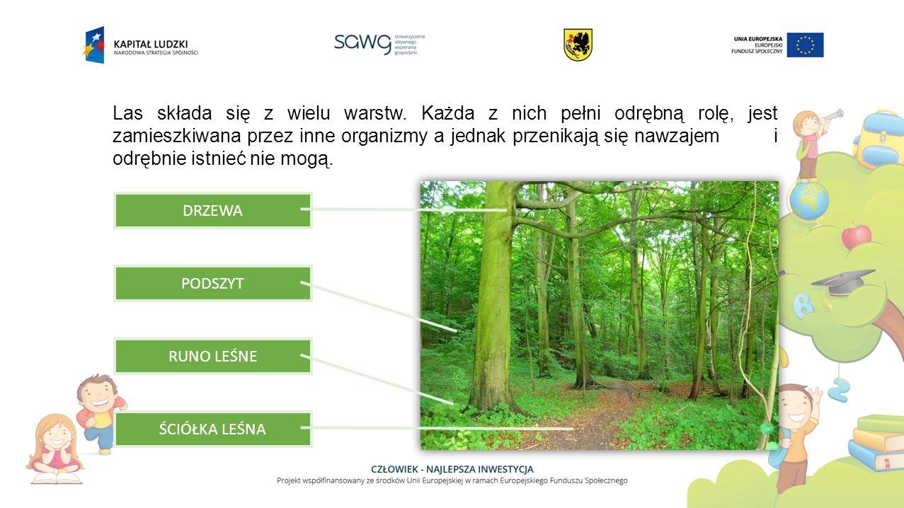 Las składa się z wielu warstw. Każda z nich pełni odrębną rolę, jest zamieszkiwana przez inne organizmy a jednak przenikają się nawzajem i odrębnie is