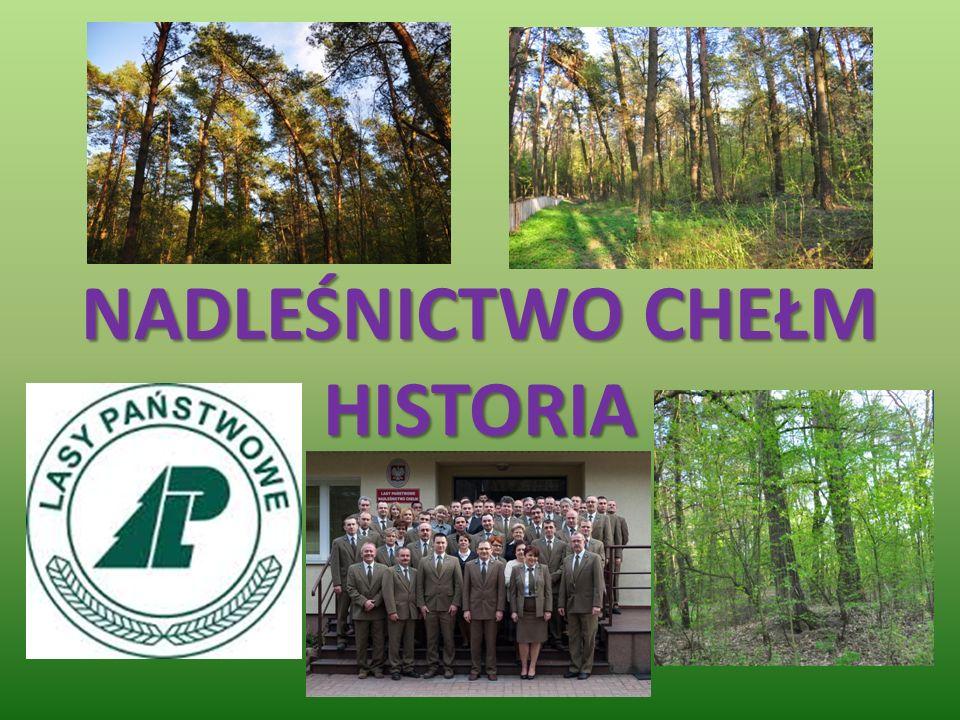 O nadleśnictwie Teren nadleśnictwa to około 21,6 tysięcy hektarów lasów.