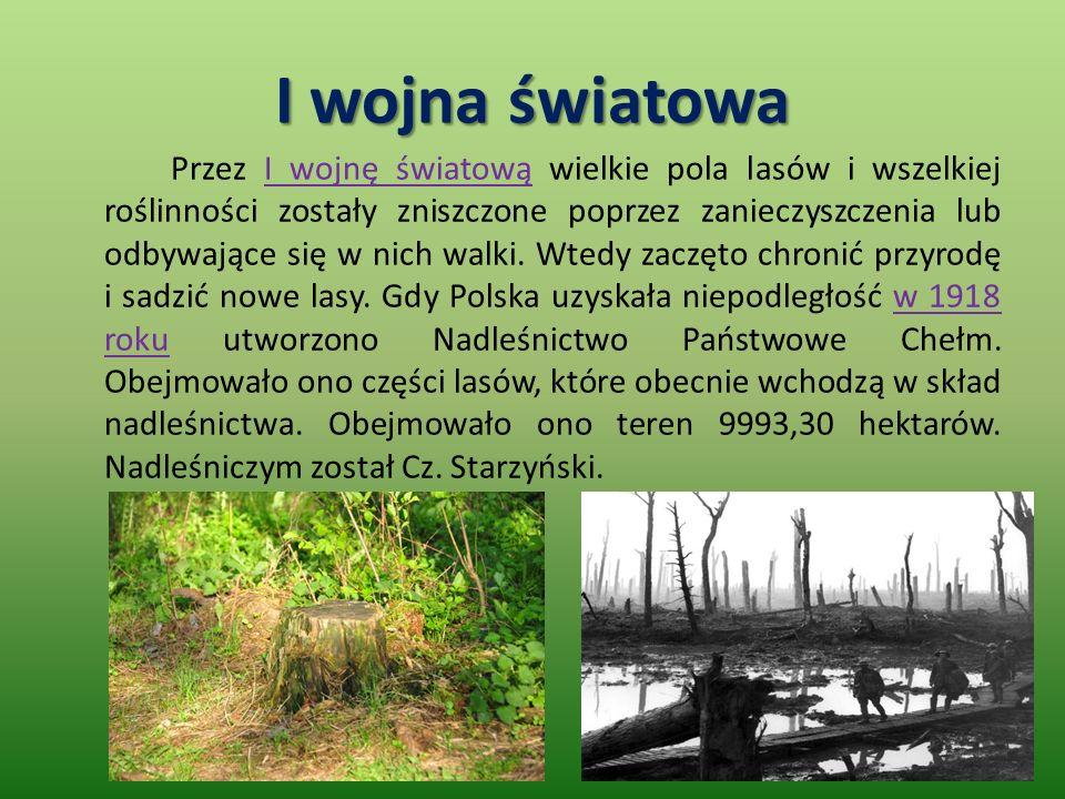 I wojna światowa Przez I wojnę światową wielkie pola lasów i wszelkiej roślinności zostały zniszczone poprzez zanieczyszczenia lub odbywające się w nich walki.