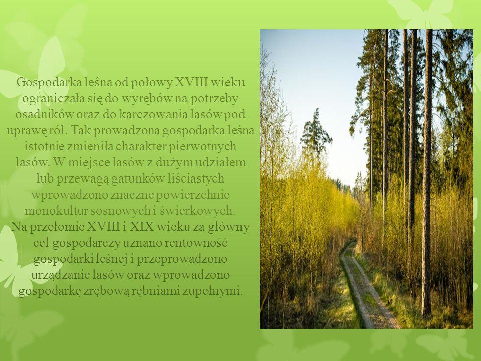 Gospodarka leśna od połowy XVIII wieku ograniczała się do wyrębów na potrzeby osadników oraz do karczowania lasów pod uprawę ról.