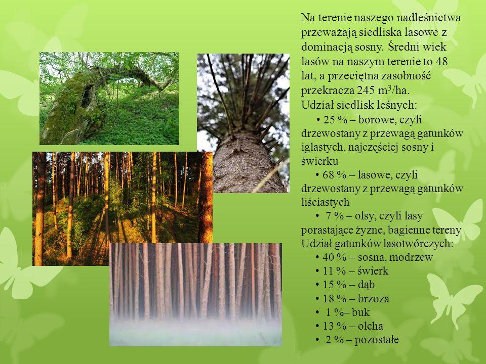 Na terenie naszego nadleśnictwa przeważają siedliska lasowe z dominacją sosny.