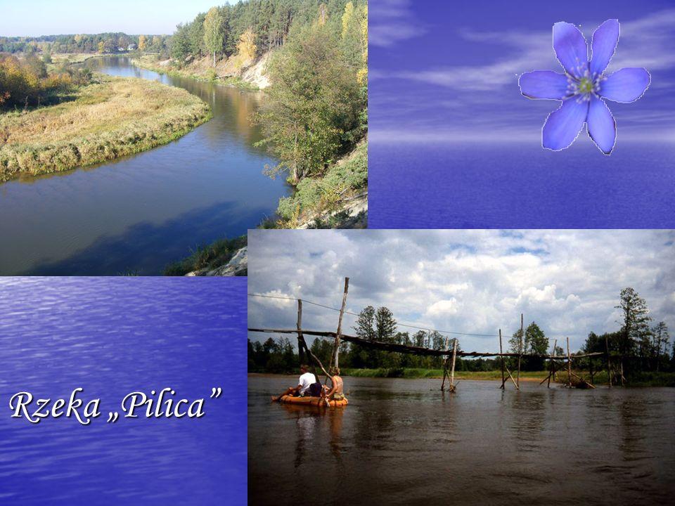 """Rzeka """"Pilica"""