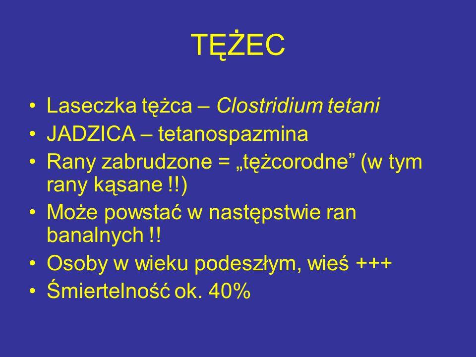 """TĘŻEC Laseczka tężca – Clostridium tetani JADZICA – tetanospazmina Rany zabrudzone = """"tężcorodne"""" (w tym rany kąsane !!) Może powstać w następstwie ra"""
