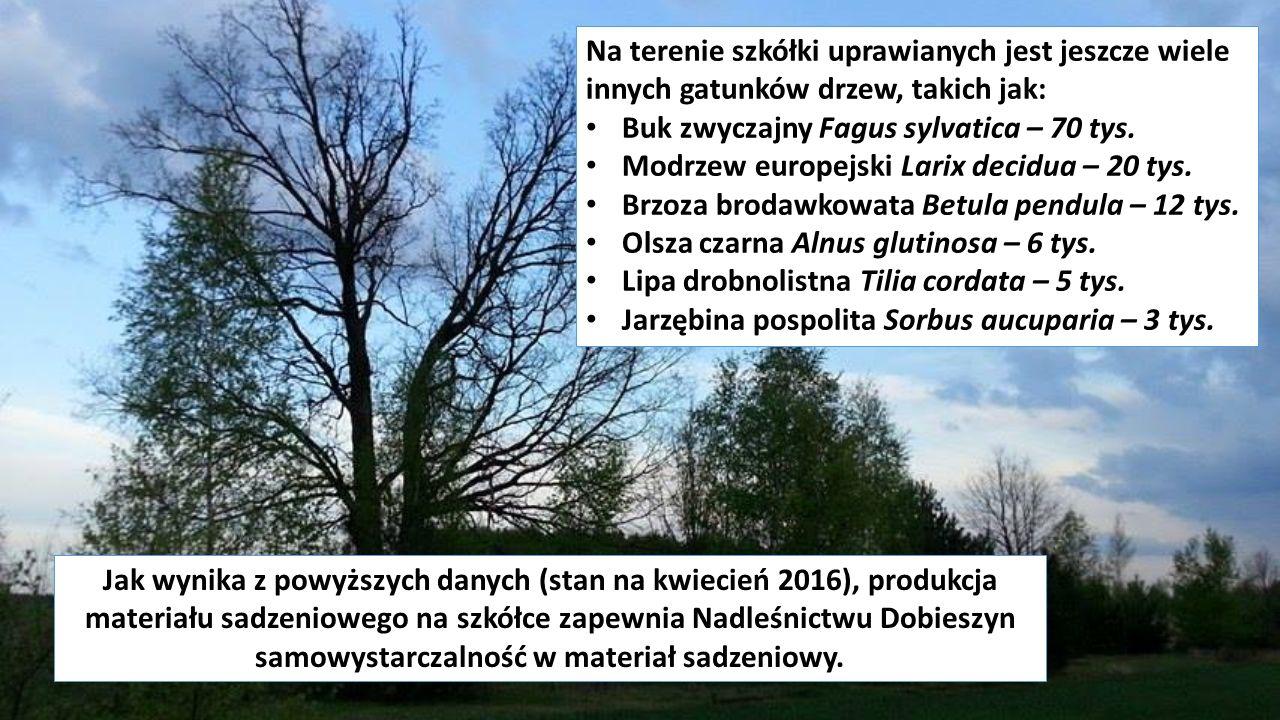 Jak wynika z powyższych danych (stan na kwiecień 2016), produkcja materiału sadzeniowego na szkółce zapewnia Nadleśnictwu Dobieszyn samowystarczalność w materiał sadzeniowy.