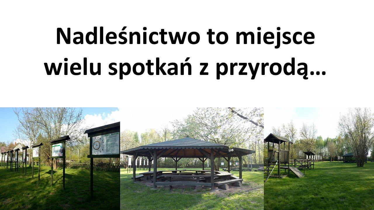 …to także szkółka Leśna Ksawerów Szkółka leśna zapewnia nadleśnictwu samowystarczalność w zakresie materiału sadzeniowego drzew i krzewów do odnowień, zalesień, poprawek, dolesień i wprowadzenia podszytów.