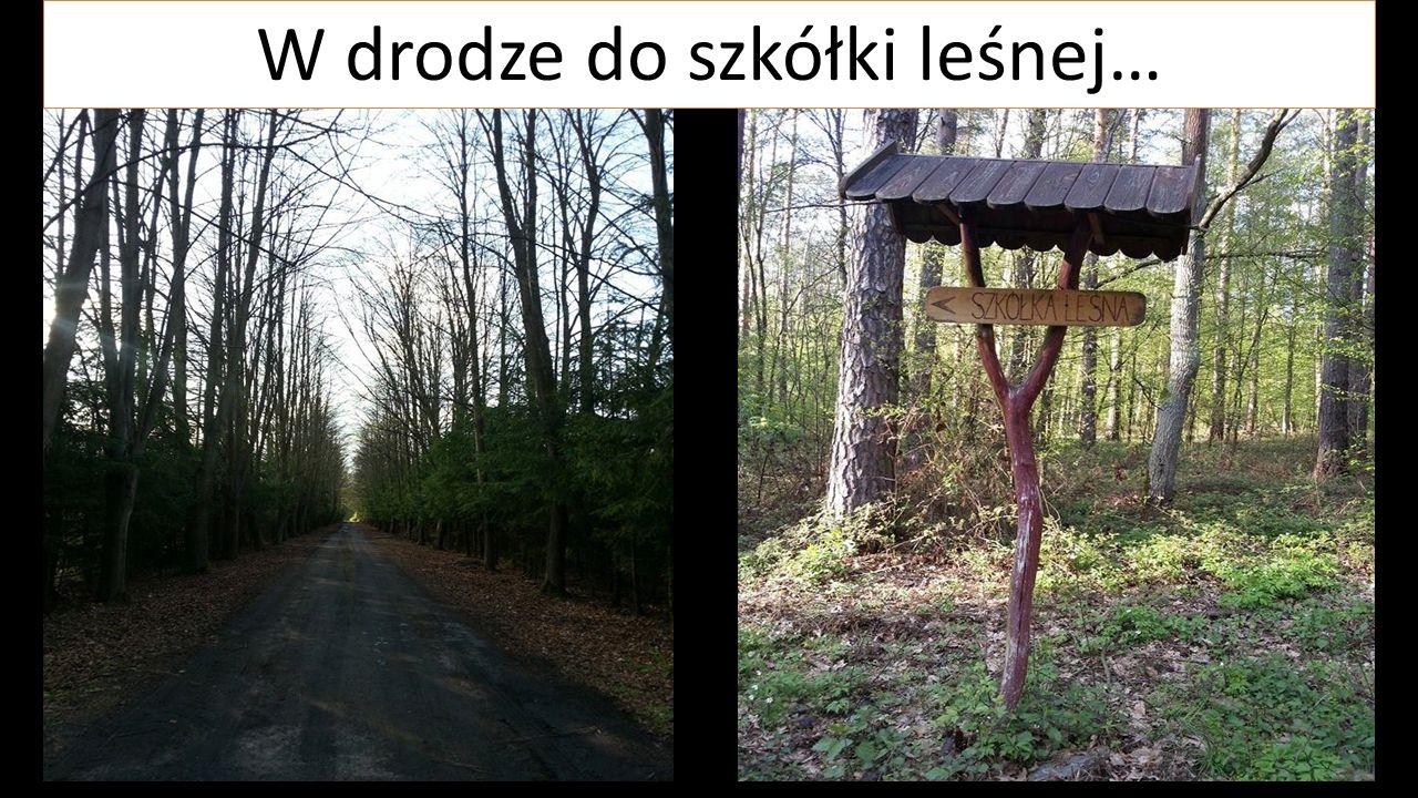 W drodze do szkółki leśnej…
