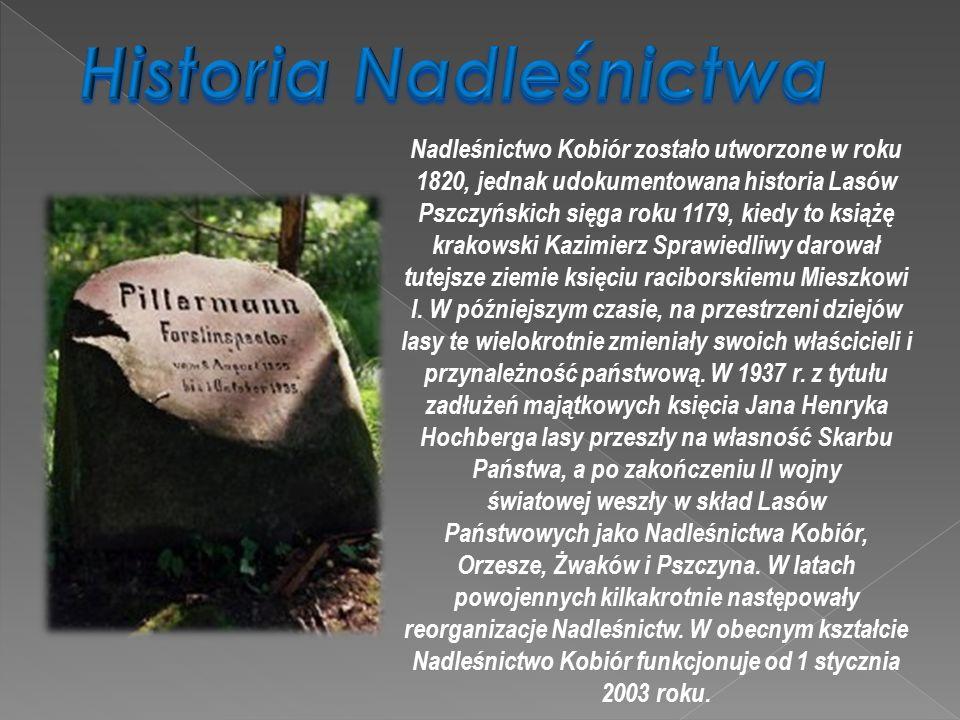 Nadleśnictwo Kobiór zostało utworzone w roku 1820, jednak udokumentowana historia Lasów Pszczyńskich sięga roku 1179, kiedy to książę krakowski Kazimi