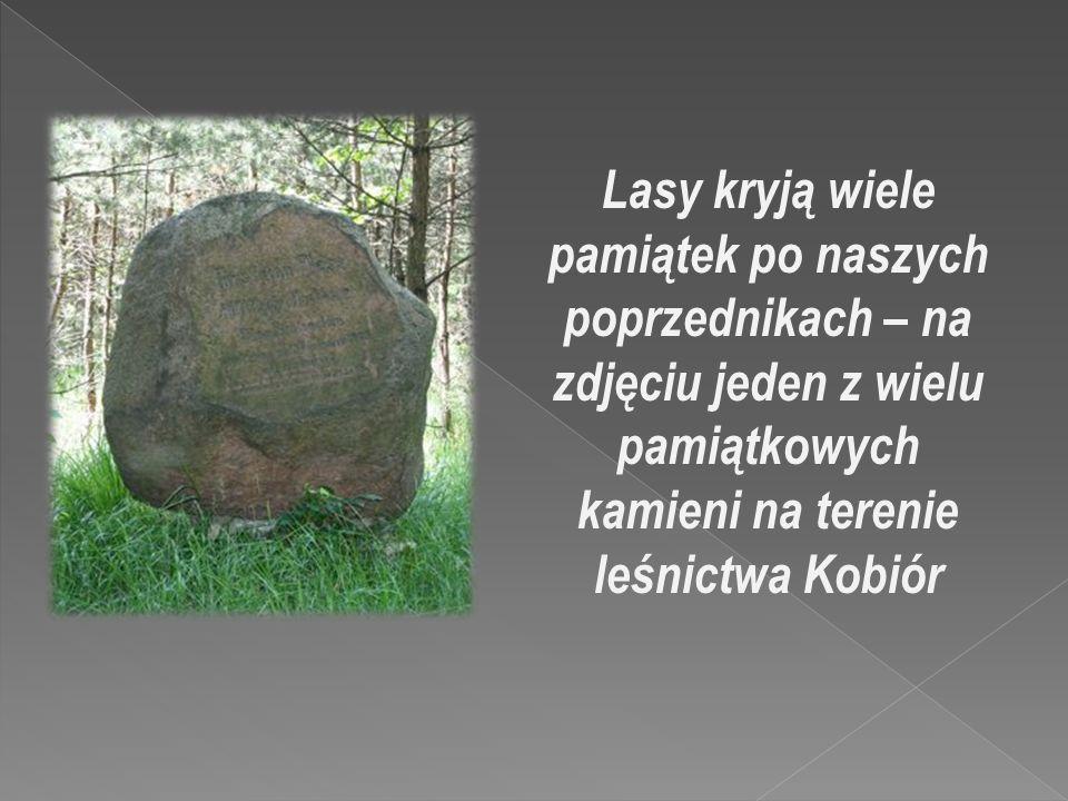 Lasy kryją wiele pamiątek po naszych poprzednikach – na zdjęciu jeden z wielu pamiątkowych kamieni na terenie leśnictwa Kobiór