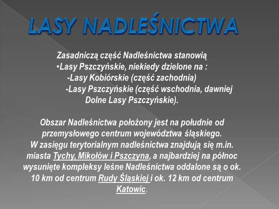 Zasadniczą część Nadleśnictwa stanowią Lasy Pszczyńskie, niekiedy dzielone na : -Lasy Kobiórskie (część zachodnia) -Lasy Pszczyńskie (część wschodnia, dawniej Dolne Lasy Pszczyńskie).
