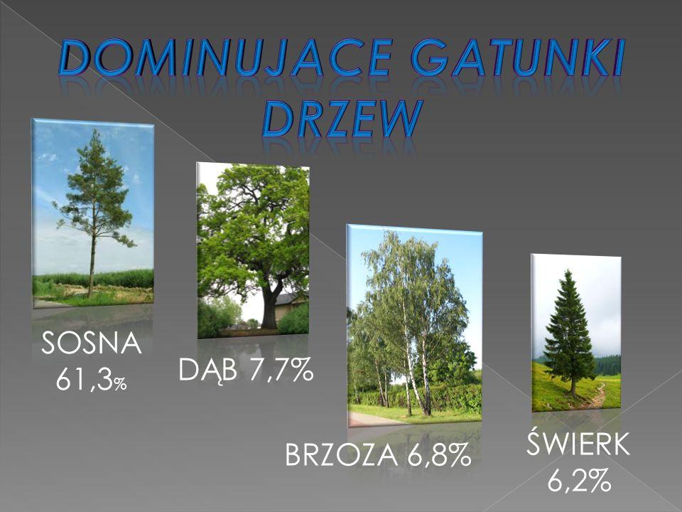 SOSNA 61,3 % DĄB 7,7% BRZOZA 6,8% ŚWIERK 6,2%
