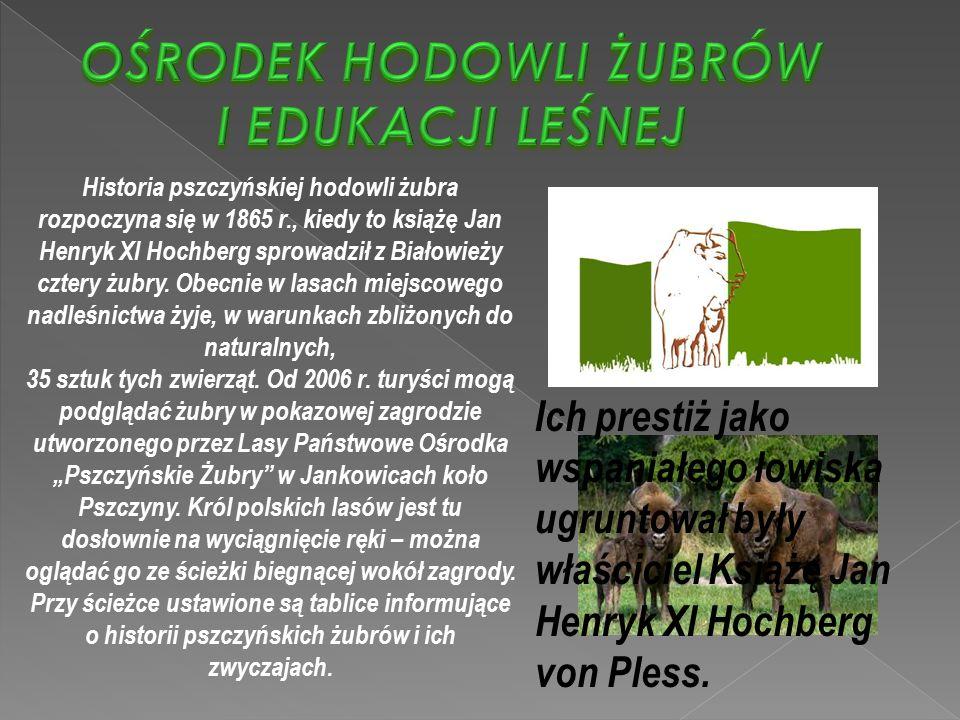 Historia pszczyńskiej hodowli żubra rozpoczyna się w 1865 r., kiedy to książę Jan Henryk XI Hochberg sprowadził z Białowieży cztery żubry. Obecnie w l