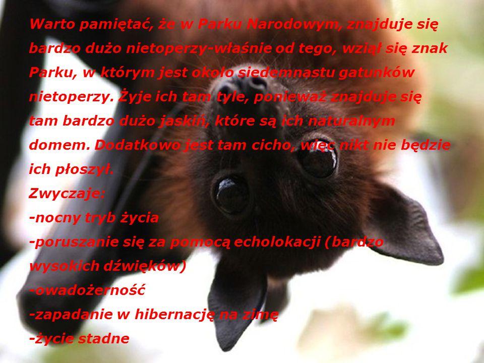 W skład fauny Parku Ojcowskiego wchodzą: - nietoperze - sarny - zające - dziki - lisy - kuny - tchórze - dzięcioły - orzesznice - piżmaki