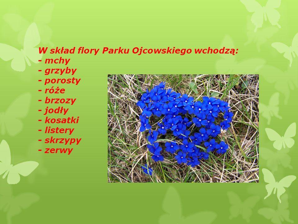 W skład flory Parku Ojcowskiego wchodzą: - mchy - grzyby - porosty - róże - brzozy - jodły - kosatki - listery - skrzypy - zerwy