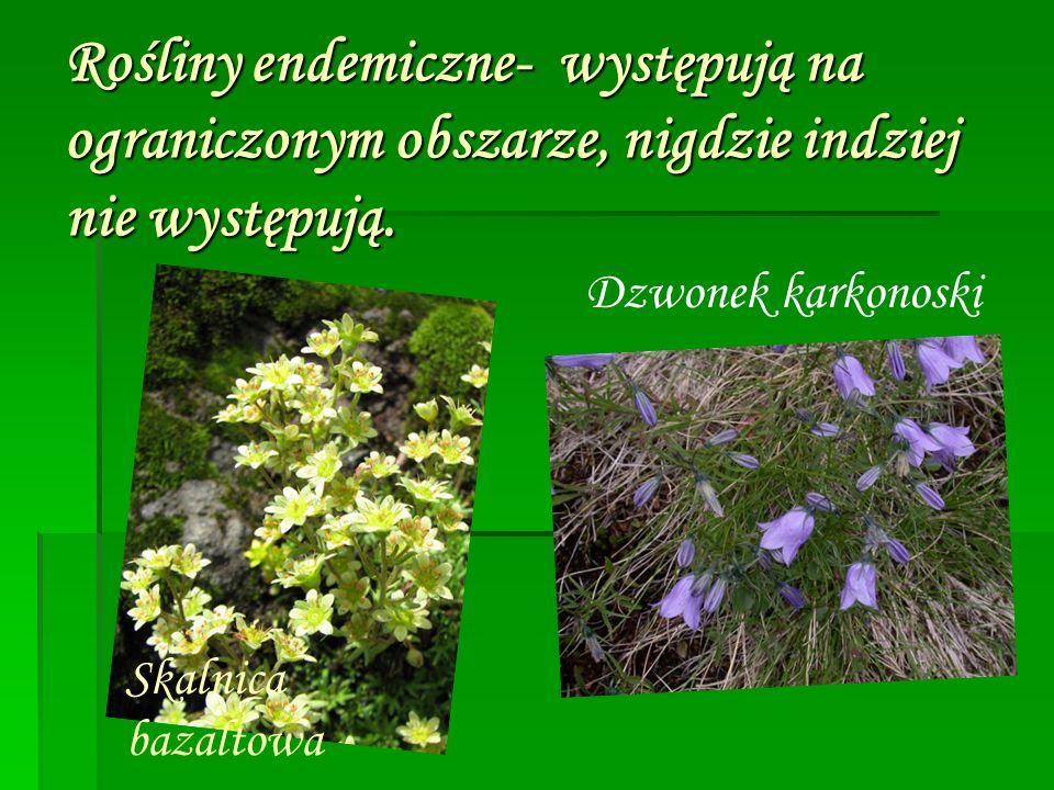 Rośliny endemiczne- występują na ograniczonym obszarze, nigdzie indziej nie występują. Skalnica bazaltowa Dzwonek karkonoski