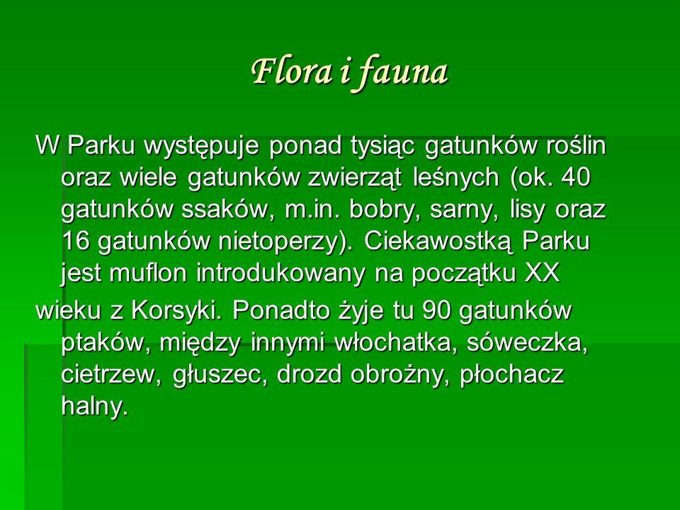 Flora i fauna W Parku występuje ponad tysiąc gatunków roślin oraz wiele gatunków zwierząt leśnych (ok. 40 gatunków ssaków, m.in. bobry, sarny, lisy or